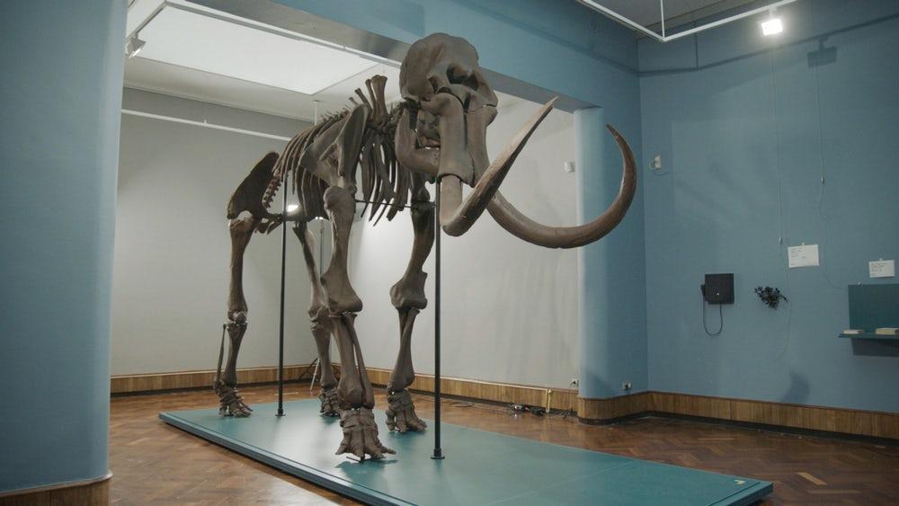 Копия скелета мамонта, созданная на 3D принтере